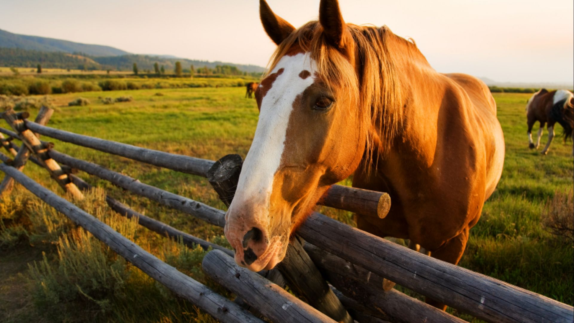 Horseback Riding Guided Tours in Jackson Hole - Grand ...