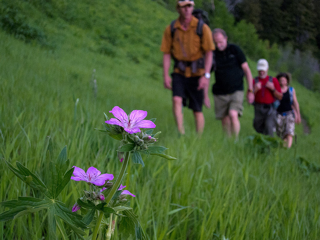 Spend the day with a local guide, hiking the beautiful trails around Jackson Hole.
