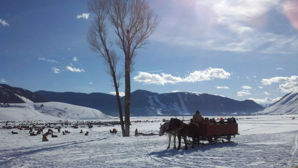 Sunny sleigh ride