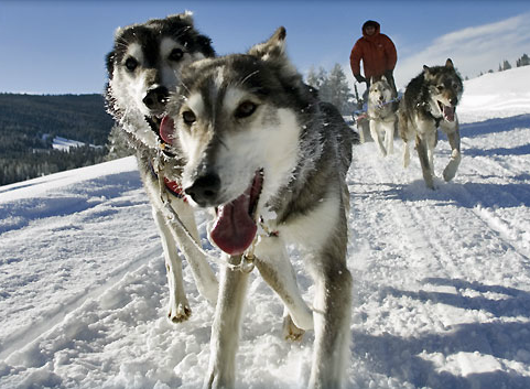 Jackson Hole Iditarod