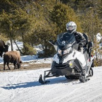 Snowmobile Tour Yellowstone with bison
