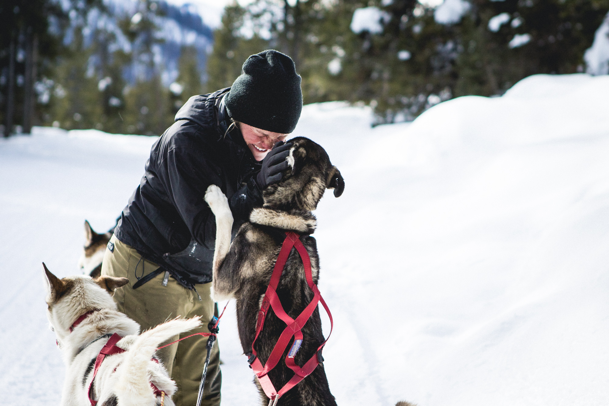 dog sledder kissed by a sled dog
