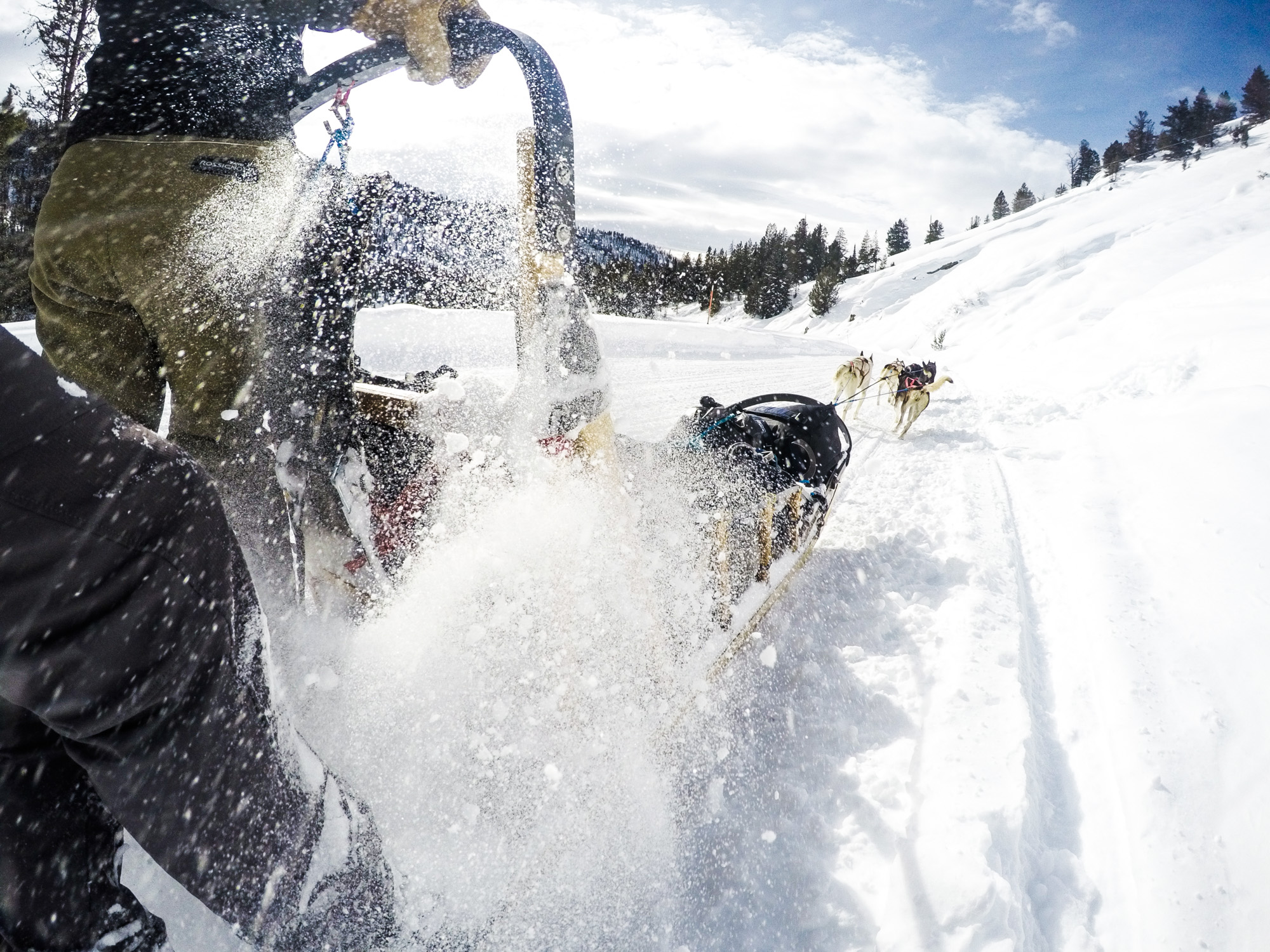 sled's vantage point while dog sledding