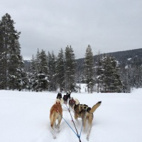 Dog Sledding Adventures in Jackson Hole