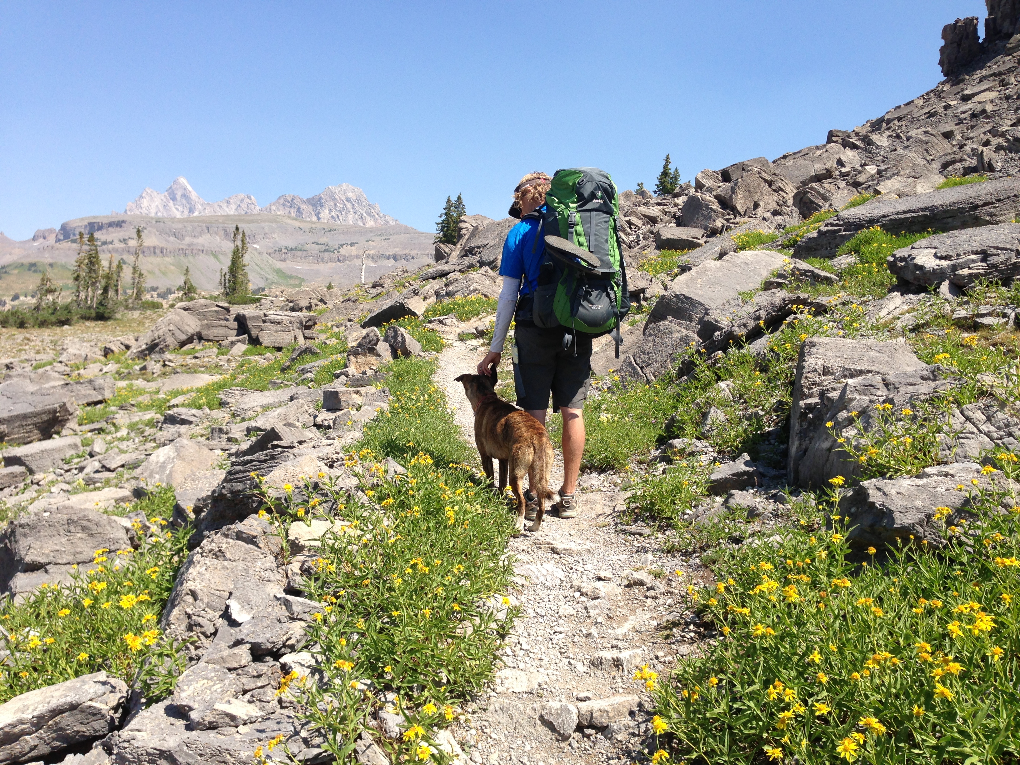 jackson hole dog hiking