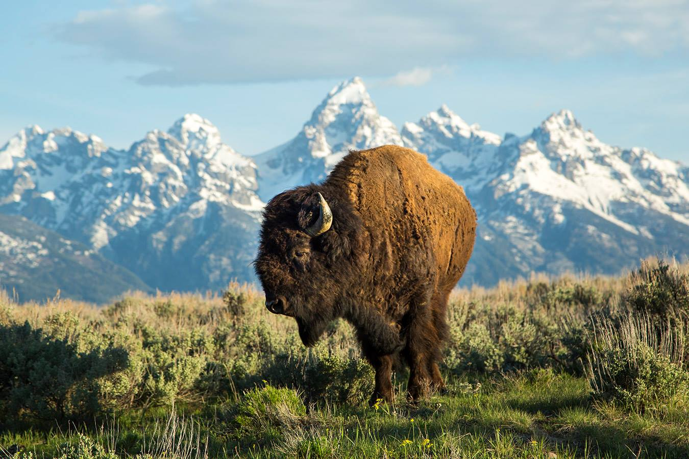 Wildlife Tours Jackson Hole Wy Central Reservations
