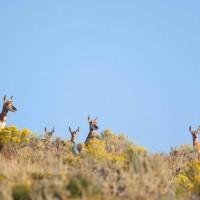 Jh wildlife safaris wildlife Antelope