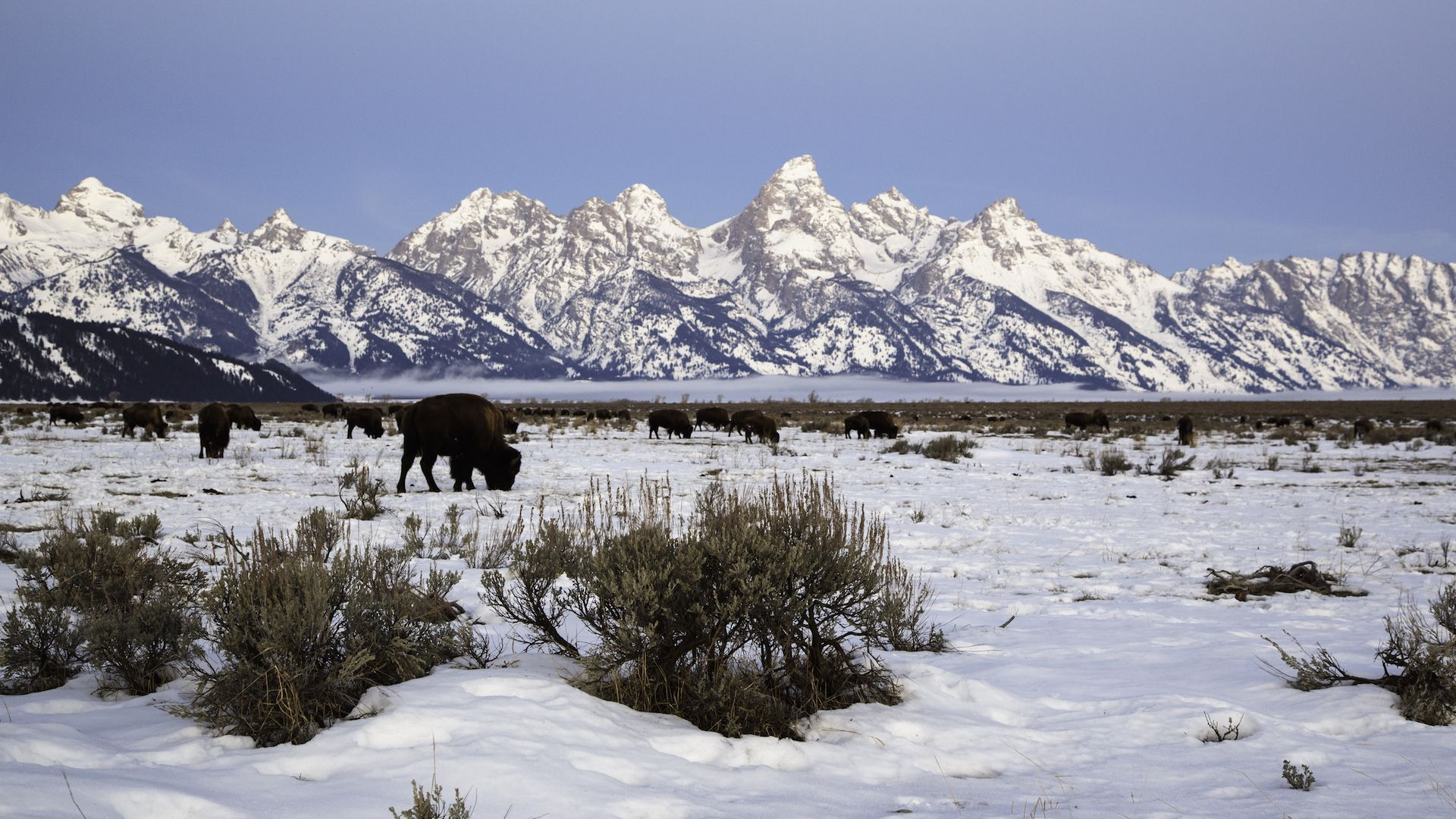 Winter tours snowcoach jackson hole wy central for What to do in jackson wy