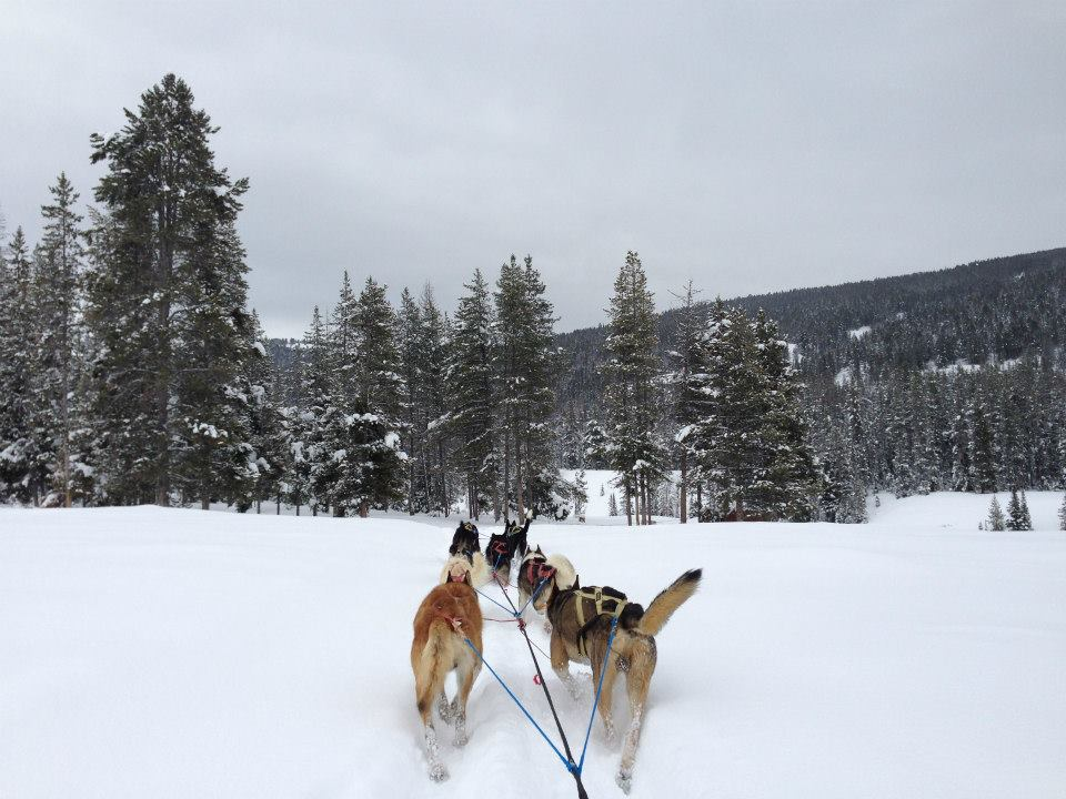 dog sled jackson hole