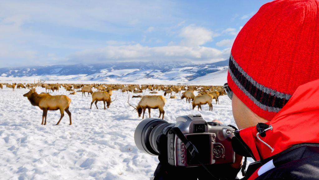 elk refuge tour