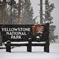 Welcome to Yellowstone in the winter