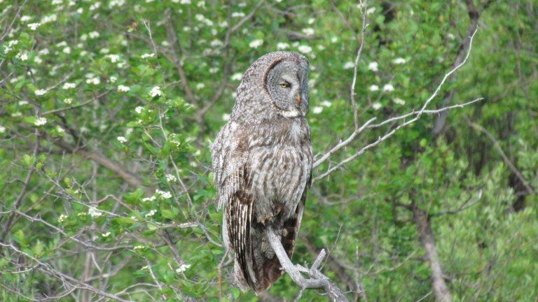 Go On A Spring Safari in Grand Teton National Park