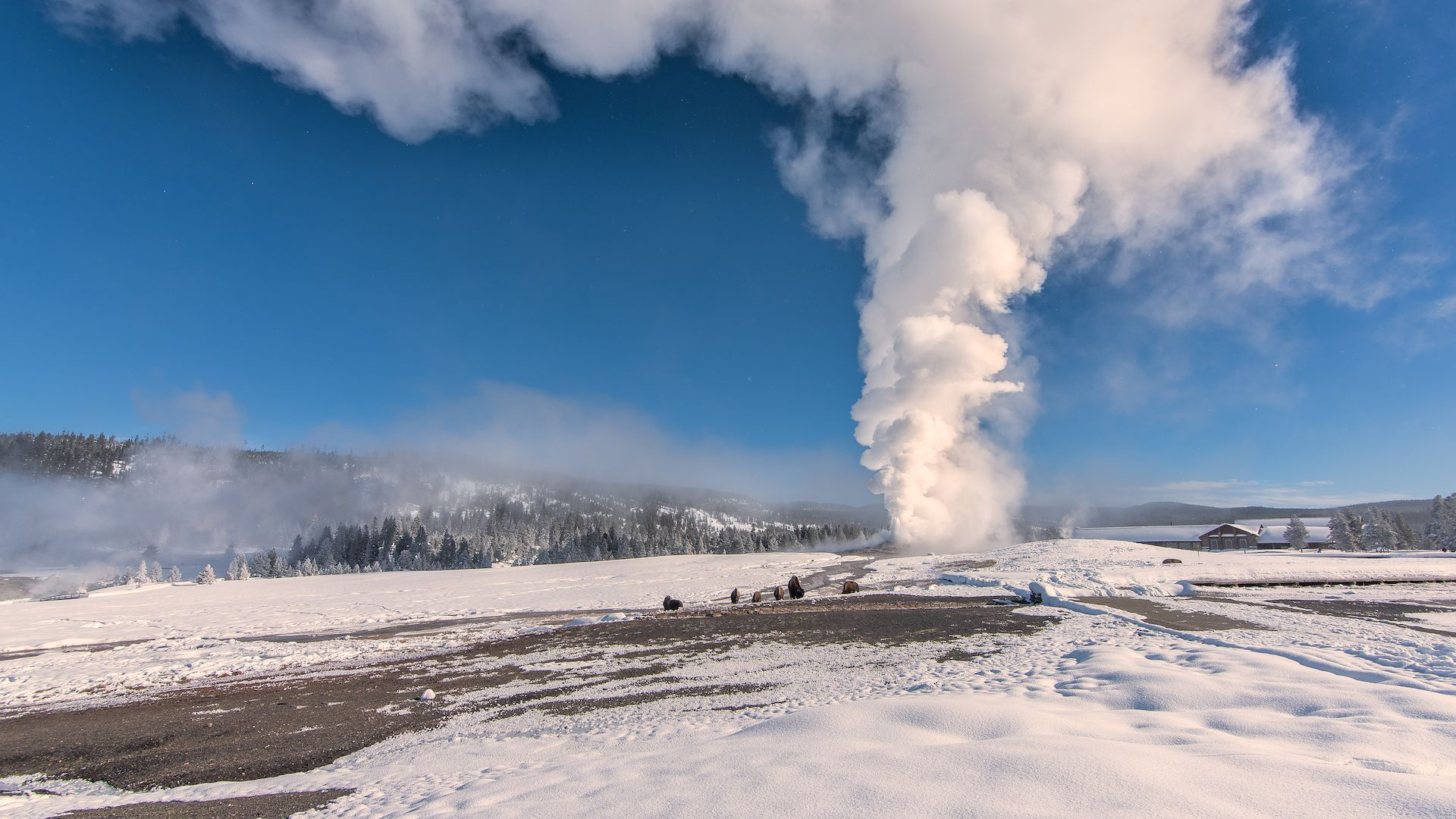 5 Reasons To Visit Yellowstone This Winter Jackson Hole Wy