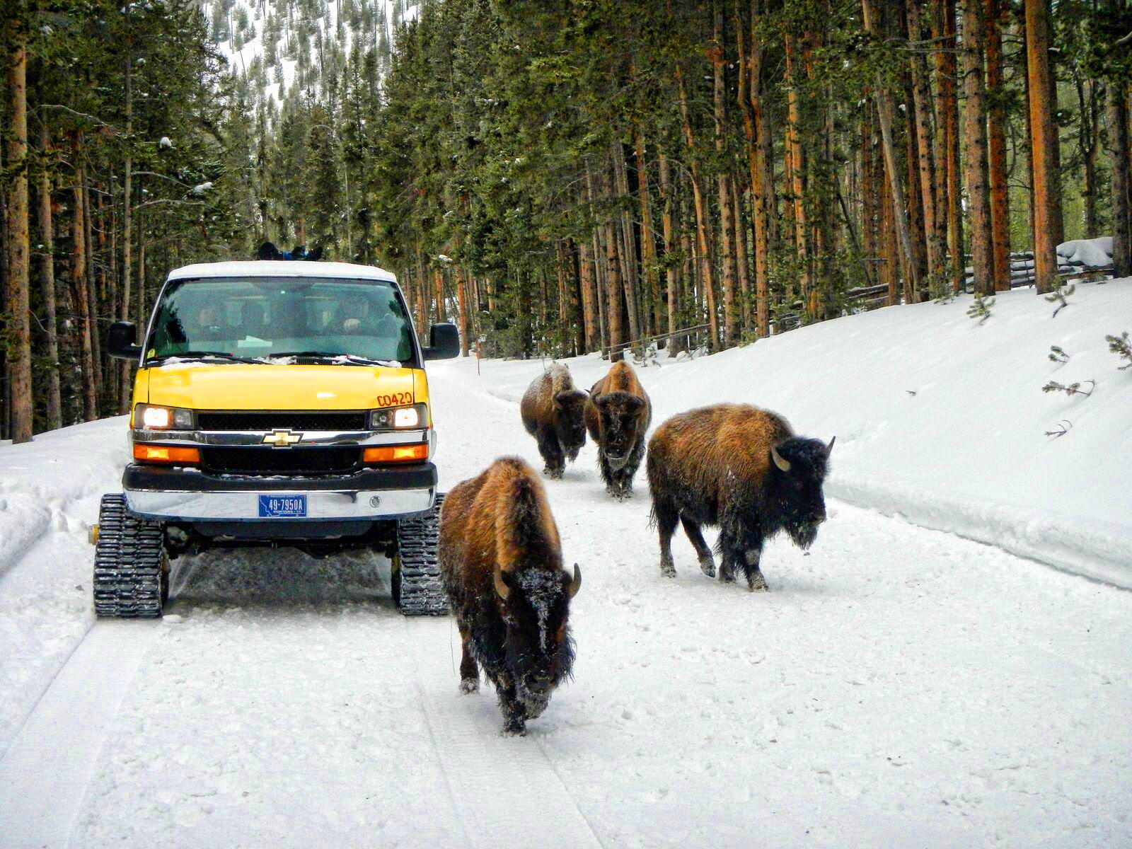 Yellowstone snowcoach tour