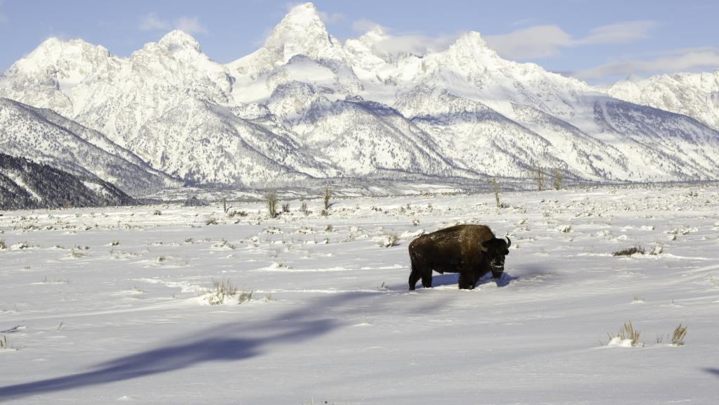 Visit Jackson Hole and Save 10% On Your Stay