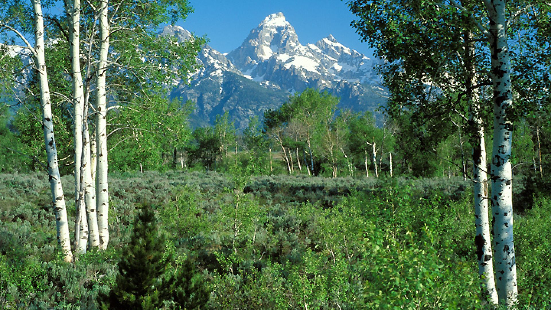 Top 5 things to do in jackson hole this spring for Things to do in jackson wy
