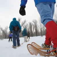 A Walk in the Woods: Exploring Jackson Hole on Snowshoes