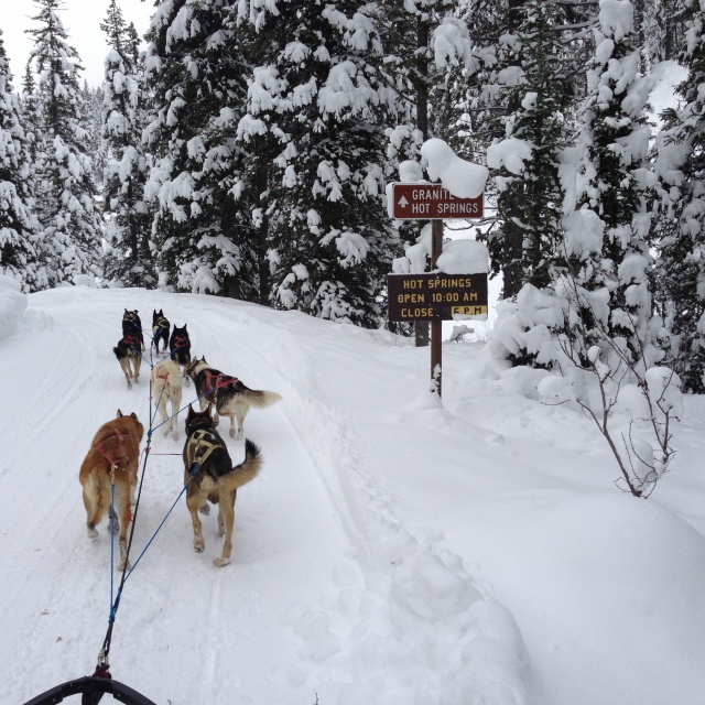 Dog Sledding Tours